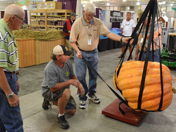 600+ lb pumpkin being weighed at Kansas state fair