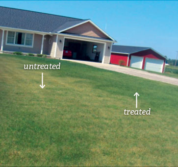 SumaGrow treated yard compared to untreated grass